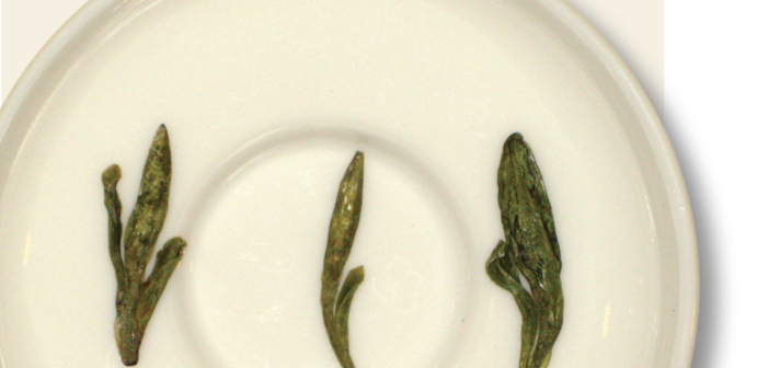 Know Your Tea: Long Jing