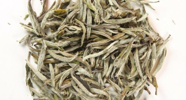 What is Silver Needle White Tea?