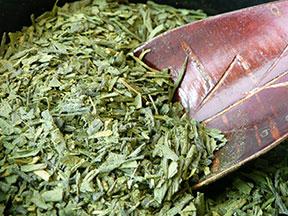 Green Tea by Brandy Kajino