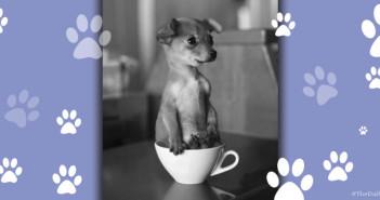 Puppy in Teacup Feature