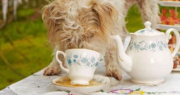 W&B Tea for dogs
