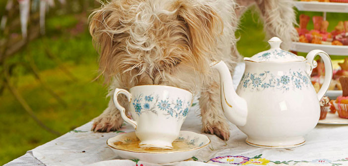 Share a Cuppa with Fido? Really?!