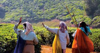 End of Day, Tea Estate, Kanan Devan Hills, India